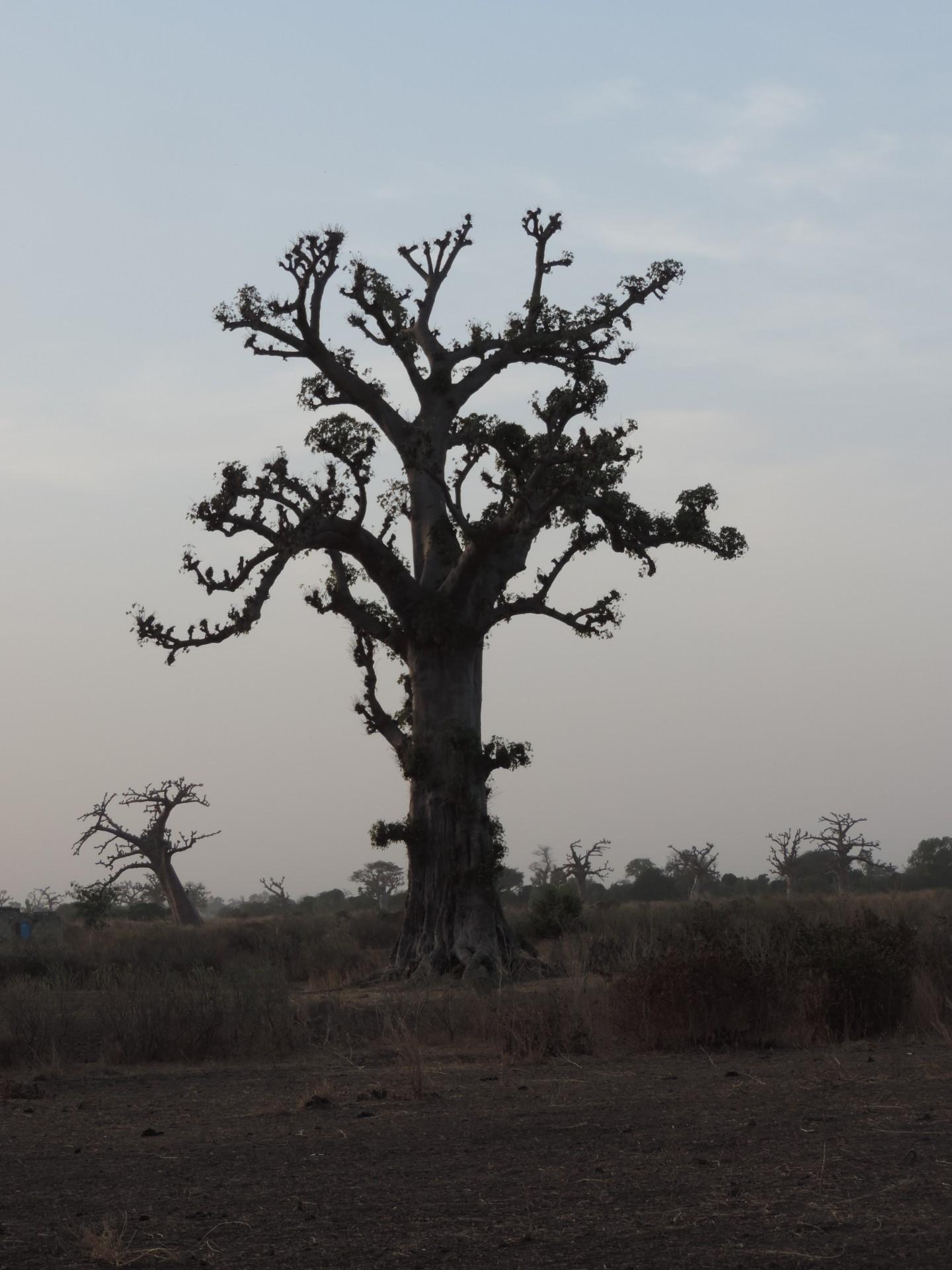 Le Sénégal en photos