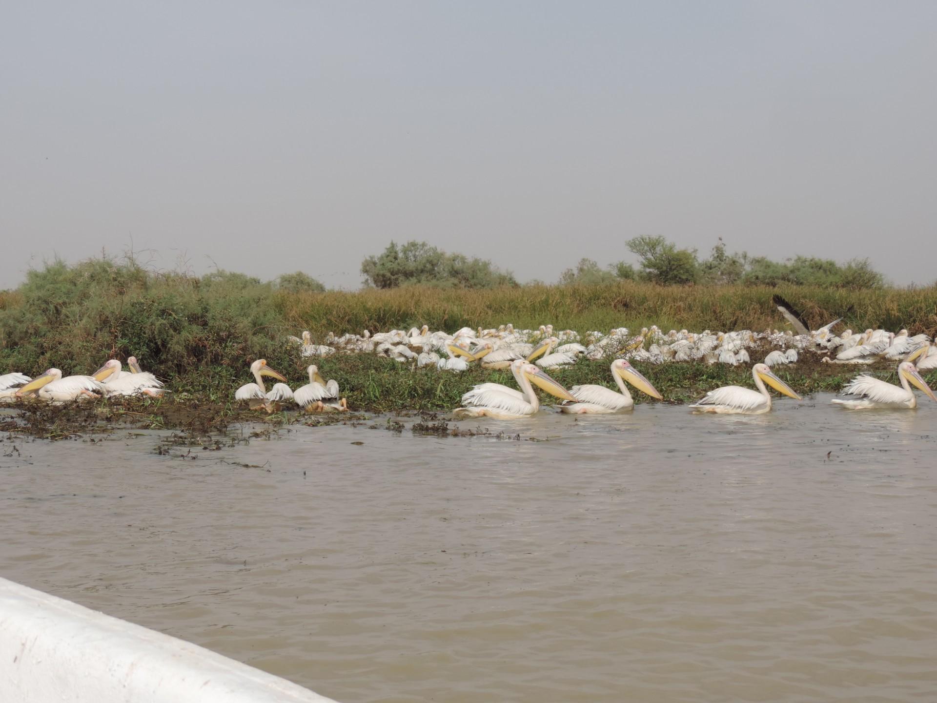 Parc ornithologique du Doudj